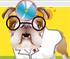 Dr.Bulldog's
