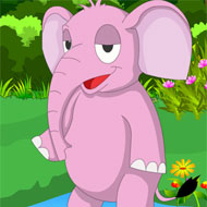 Hraneste Elefantul!