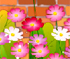 Flower Chain Reaction